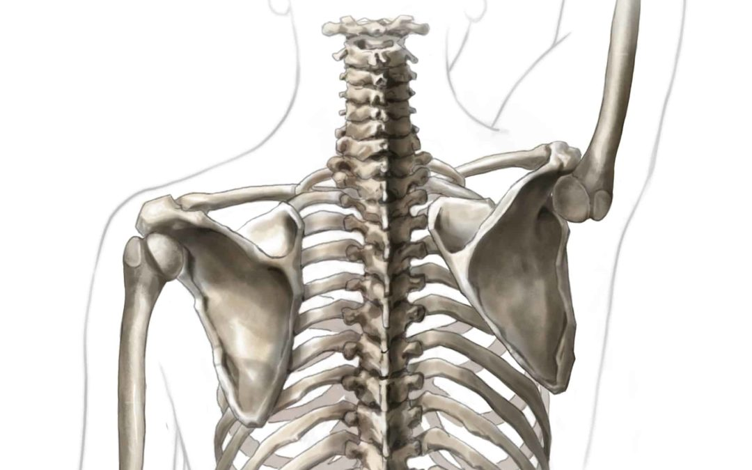 Why Rotator Cuff Exercises Won't Fix Your Shoulder Pain